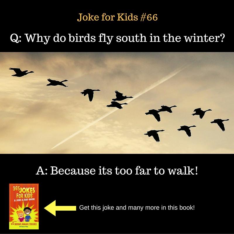 Birds #66